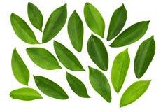 Blätter getrennt auf Weiß Lizenzfreie Stockfotografie