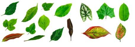 Blätter getrennt auf weißem Hintergrund Stockfoto