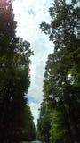 Blätter getrieben durch die Bäume Lizenzfreie Stockfotos