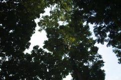 Blätter, Grün, Weiß, Braun, Bäume, Schatten, Schwarzes, Blau, Niederlassungen, Himmel, Hintergrund, Raum Stockfoto
