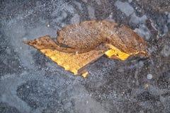Blätter graviert im Eis lizenzfreies stockbild