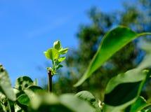 Blätter hinter den Blättern Lizenzfreie Stockbilder