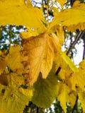 Blätter (Hintergrund) Lizenzfreies Stockfoto