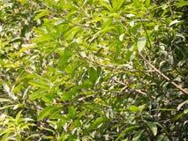 Blätter Hintergrund und Sonnenglanz auf Blättern Stockbild