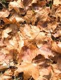 Blätter im Boden Lizenzfreies Stockbild