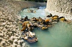 Blätter im Entwässerungsgraben Stockfotografie