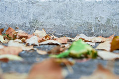 Blätter im Fall Stockbild