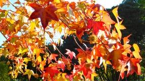 Blätter im Fall Stockbilder