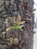 Blätter im Garten Stockfoto