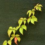 Blätter im Gewebehintergrund lizenzfreie stockbilder