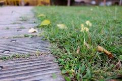 Blätter im Gras lizenzfreie stockfotografie