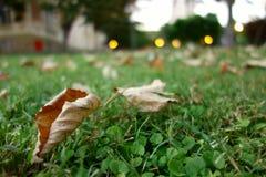 Blätter im Gras stockfoto