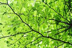 Blätter im Herbst Lizenzfreie Stockfotografie
