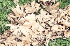 Blätter im Herbst Stockfoto