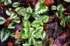 Blätter im Herbst Lizenzfreies Stockbild