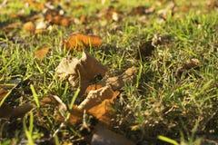 Blätter im Herbst auf dem Gras Lizenzfreie Stockfotografie