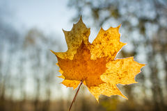 Blätter im Herbstwald Stockbilder