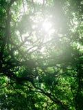 Blätter im hintergrundbeleuchteten Showstrukturrahmen Lizenzfreies Stockfoto