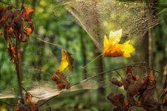 Blätter im Netz Stockfoto
