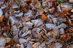 Blätter im Raureif Stockbild