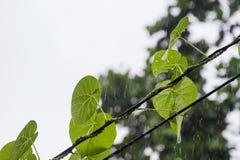 Blätter im Regen auf Hintergrund Stockbilder