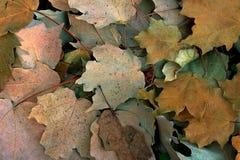 Blätter im Sommer Stockbild