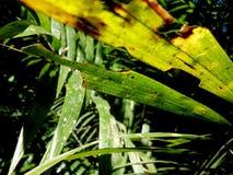 Blätter im Sonnenlicht lizenzfreie stockbilder