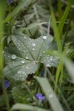 Blätter im transparenten Tau Stockfoto