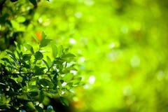 Blätter im Vordergrund Lizenzfreie Stockfotografie