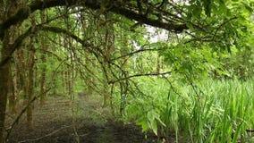 Blätter im Wald stock footage