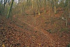 Blätter im Wald Lizenzfreie Stockbilder