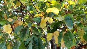 Blätter im Wald Lizenzfreie Stockfotos