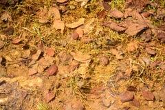 Blätter im Wald Stockfoto