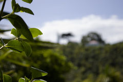 Blätter im Wald Lizenzfreies Stockfoto