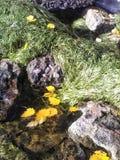 Blätter im Wasser Lizenzfreie Stockfotos