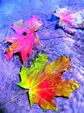 Blätter im Wasser Stockfotografie