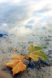 Blätter im Wasser Lizenzfreies Stockbild