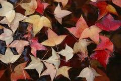 Blätter im Wasser. Lizenzfreies Stockbild