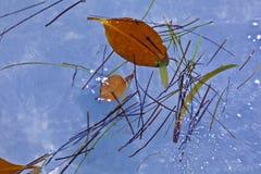 Blätter im Wasser in der schönen Zusammensetzung mit dem Meer Stockfotos