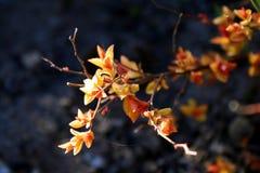 Blätter lösen sich auf Lizenzfreie Stockfotografie