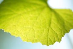 Blätter mit Blau- und bokehhintergrund Lizenzfreies Stockbild