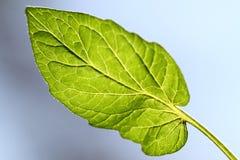 Blätter mit blauem Hintergrund Stockfoto