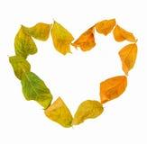 Blätter mit dem Herzformlegen Stockfoto