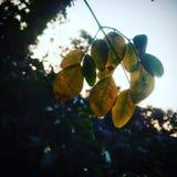 Blätter mit den schönen Schatten am Abend mit schönen Umgebungen stockbild