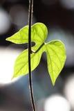 Blätter mit Dunkelheits- und bokehhintergrund Stockfotos