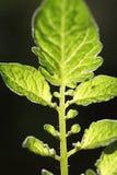 Blätter mit dunklem Hintergrund Stockfotos