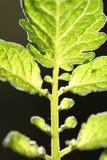 Blätter mit dunklem Hintergrund Lizenzfreies Stockbild