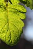 Blätter mit dunklem Hintergrund Stockbild