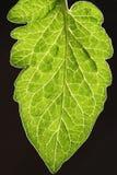 Blätter mit dunklem Hintergrund Stockfoto