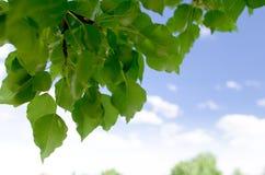 Blätter mit Himmelhintergrund 2 Lizenzfreie Stockfotos